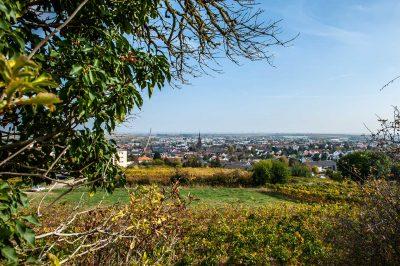 WID - Stiftung, Blick auf Grünstadt ins Leiningerland